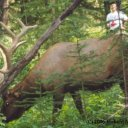 Peter and the Bull Elk